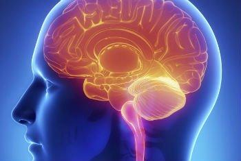 fungsi otak yang baik